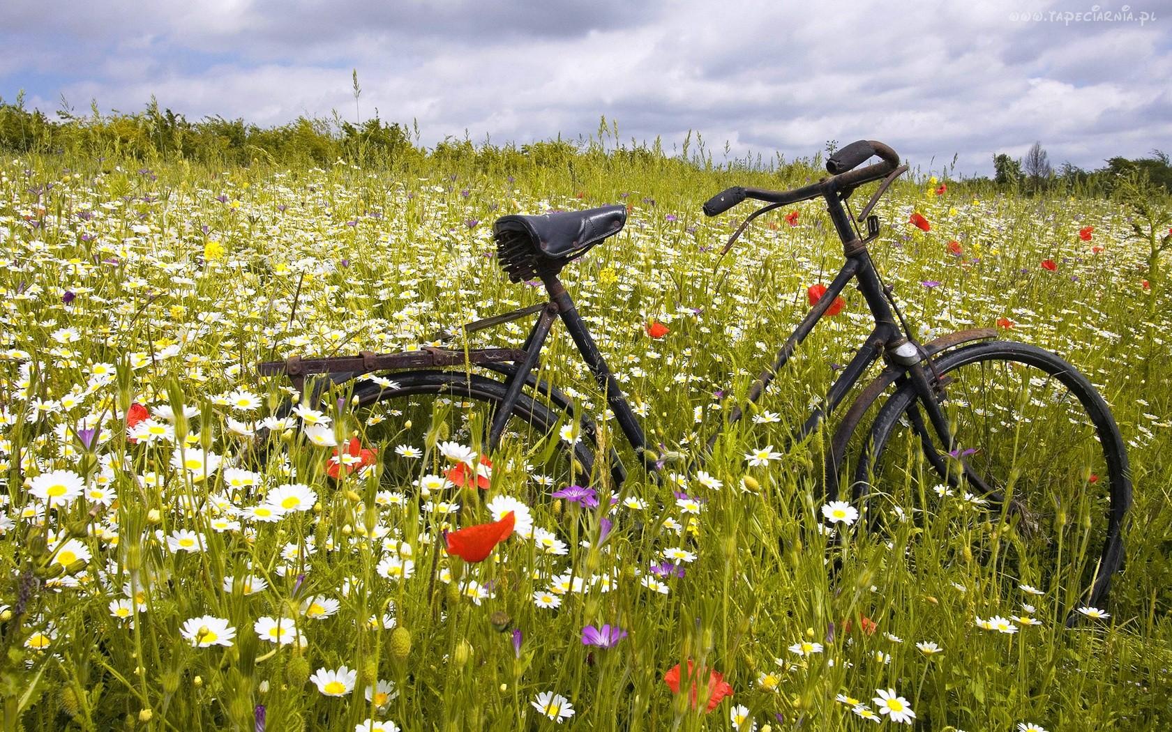 laka kwiaty rower